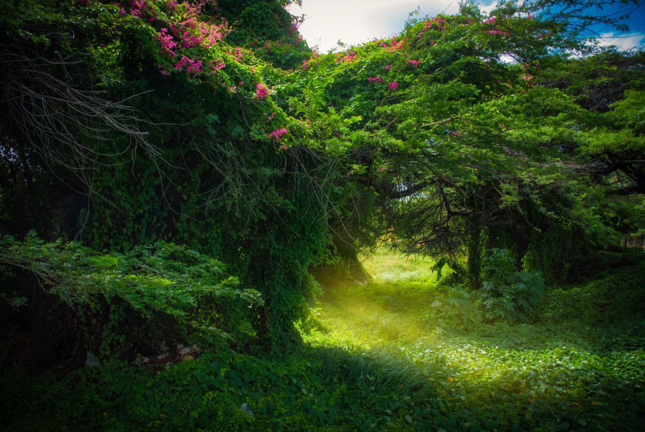 Foto Aruba door Laura Wagenaars